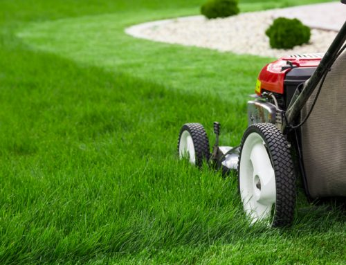 February Lawn Tips by Mathis Outdoors – Reduce the amount of shade in your lawn
